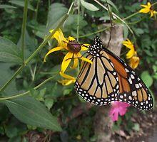 Butterfly  by JoelleAlice