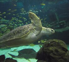 Sea turtle  by JoelleAlice