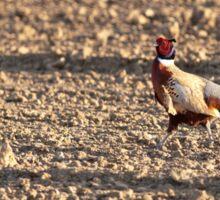 Common pheasant Sticker