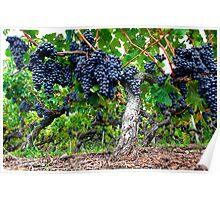 Grape Jungle Poster
