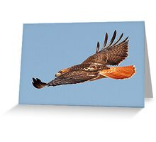 112611 Red Tailed Hawk Greeting Card