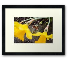Rain Cover Roy Framed Print