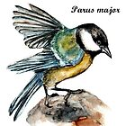 Parus Major by AnnaShell