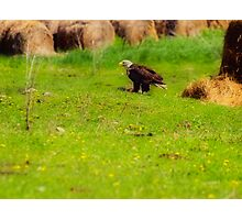 The Eagle and his Kill Photographic Print