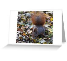 Small beautiful Squirrel. Белка. by Brown Sugar . Views (126) favorited by (2) Thx! Greeting Card