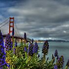 Golden Gate Flowers by Matt Erickson