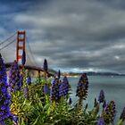 Golden Gate Flowers by Matt Erickson
