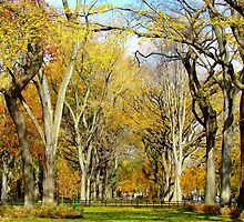 Autumn towers in Central Park, New York City  by Alberto  DeJesus