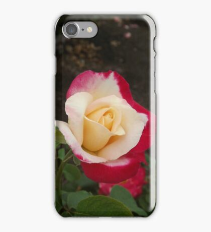Red Dipped Rose iPhone Case/Skin