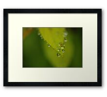 Nature's Pearls Framed Print