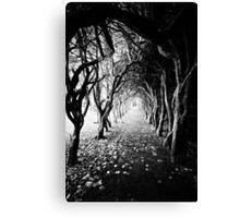 tree tunnel Canvas Print