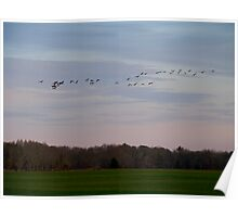 Geese Fly Over the Turf Farm at Dusk - West Kingston - Rhode Island Poster