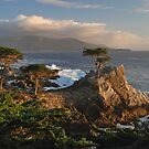 Lone Cypress - Monterrey, California by Richard Rushton