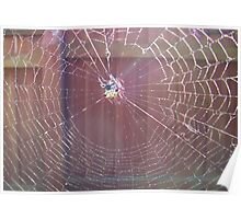 Spider Web in Sunlight Poster
