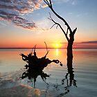 Lake Bonney Sunrise by Bill  Robinson