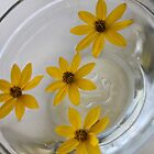 Daisies in Water by Melissa DeBusk