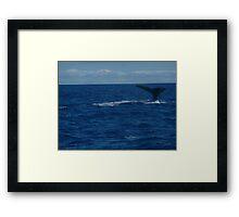 Hunting Dive Framed Print