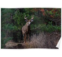 The King is Dead...Long Live the King - White-tailed Deer Poster