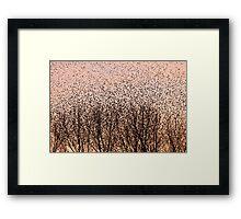 Murmuration of Starlings at Gretna Framed Print