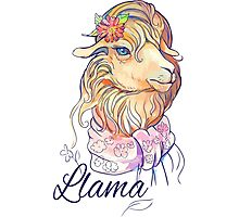 isolated image of cute lama with flower and scarf Photographic Print