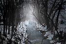 The dark river by Gisele Bedard