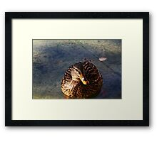 Lady Mallard Duck Framed Print