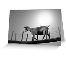 The lonesome goat Greeting Card