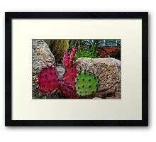 Prickley Pear Cactus Oddity Framed Print