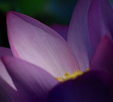 Light from within by Gisele Bedard
