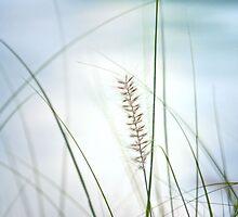 Soft dreams... by Gisele Bedard