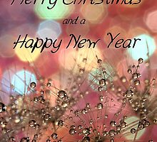 Merry Christmas and Happy New Year by Amy Dee