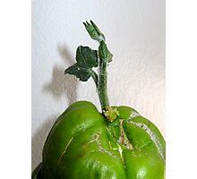 Sprouting Choko Photographic Print