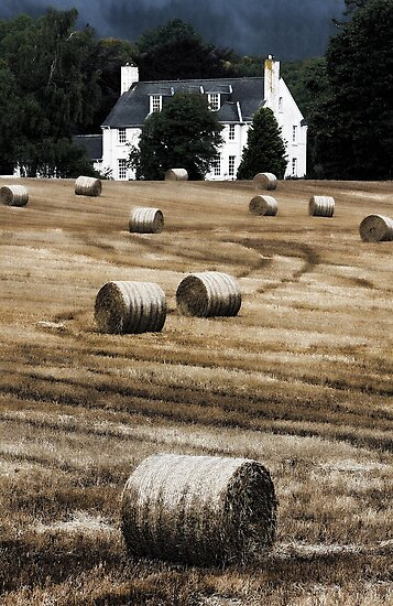 Hay Bales by Jill Fisher