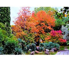 Colourful autumn landscape Photographic Print