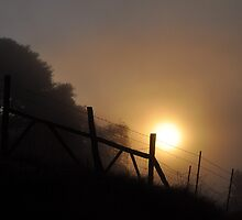 Foggy Morning Along The Fence Line by Jos-Vignettes