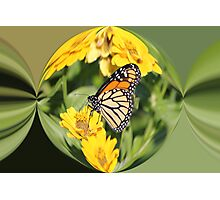 Monarch Paper Weight  Photographic Print