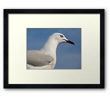 Seagull Series ~ See I Not Squark, I Patient, Now Give Me Rewards..*NOW* Framed Print