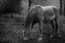 Grazing in the Rain - Mono by KBritt
