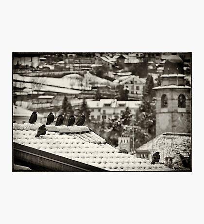 Crows on a winter day Photographic Print