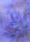 intensely hyacinth by Teresa Pople