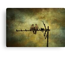 Bill and Coo Canvas Print