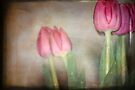 Tulip in Retro by Lynda Heins