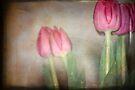 Tulip in Retro by Lynda Heins