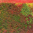 Autumn colours wall by Jasna