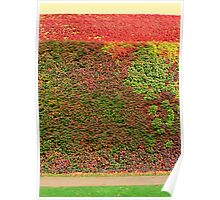 Autumn colours wall Poster