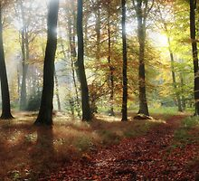 Autumn SunLight by Photokes
