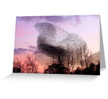 Murmuration of Starlings (3) at Gretna, November 5th 2011 Greeting Card