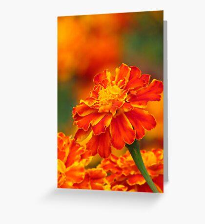 Marigold flower Greeting Card