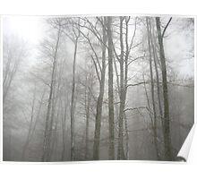 the misty landscape Poster