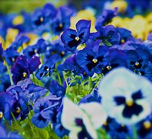 Floral Love Story . (7). by Brown Sugar. Views 189 . favorited by (2) thx! by © Andrzej Goszcz,M.D. Ph.D